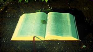 7 Artículos Gratis Para Leer en el Mes de la Biblia
