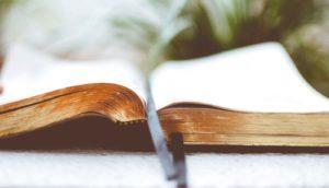 ¿Qué estás viendo en la Biblia?